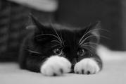2 красивых котенка ищут дом