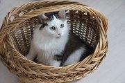 Очаровательный котенок - мальчик в дар.