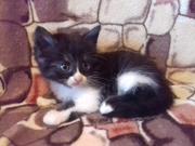 подарю котят-добрые,  игривые,  ласковые и неприхотливые. различной расц